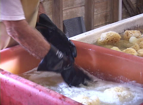 men soak sea sponges in water and squeeze them out Footage