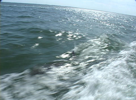 Dolphins swim and jump through the wake of a belt Stock Video Footage