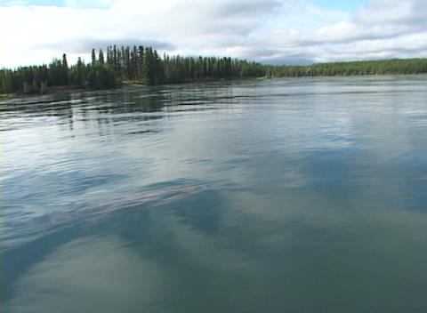A salmon or trout is netted from a boat Stock Video Footage