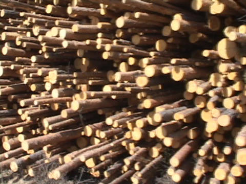 Logs are stacked awaiting processing Stock Video Footage
