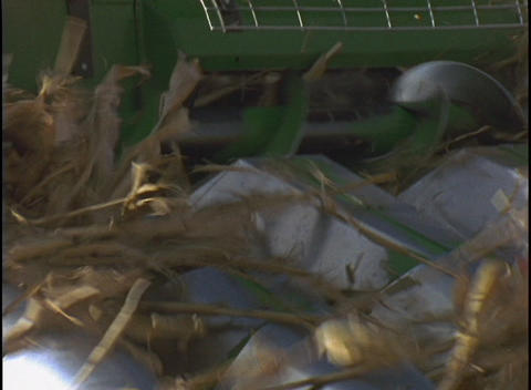 The sharp blades of a combine machine cut down stalks of... Stock Video Footage