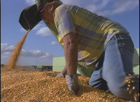 A farmer climbs onto a pile of corn kernels Live Action