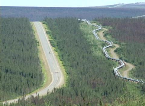 The Alaskan Pipeline traverses through trees Stock Video Footage