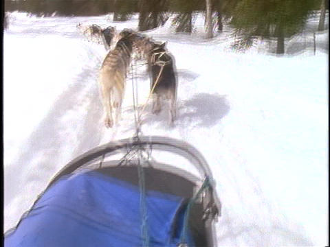 A team of dogs pulls a sled across the snow Stock Video Footage