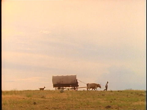 Pioneers walk with livestock and covered wagons across a... Stock Video Footage
