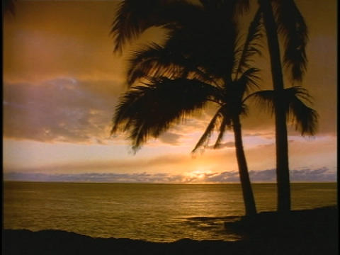 Palm trees sway in the breeze Stock Video Footage