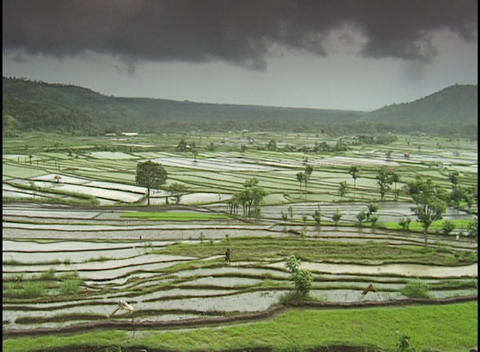 Dark clouds hang over a terraced rice paddy Footage