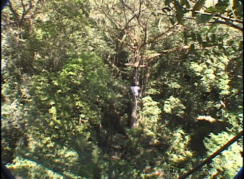 A woman jumps off of a platform and rappels on a zip-line... Stock Video Footage
