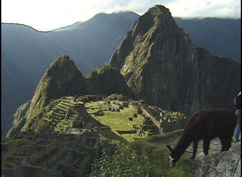 A llama grazes on a rugged mountain peak above the... Stock Video Footage