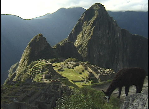 A llama grazes on a rugged mountain peak above the ancient ruins of Machu Picchu Footage