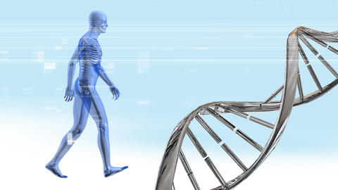 DNA double helix and human anatomy Animation
