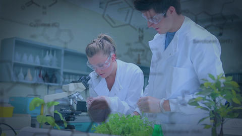 Botanists in a laboratory Animation