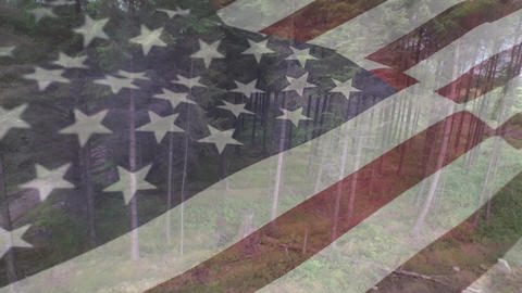 American flag and trees in the forest Animation