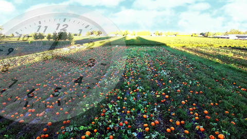 Wide field with growing crops Animation