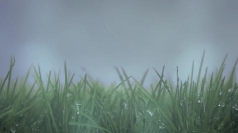 Wet grass on a stormy day Animation