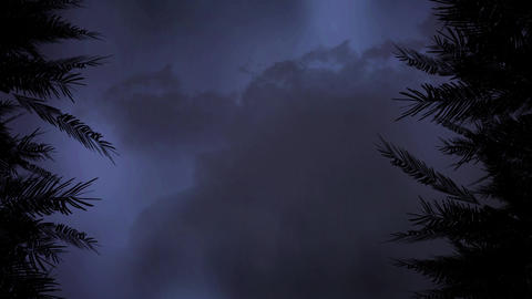 Silhouette of trees and the sky with dark clouds and lightning Animation