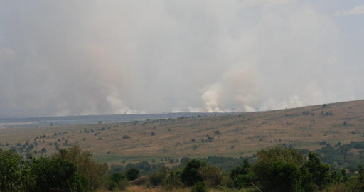 Savannah Fire, Masai Mara Park Kenya, Real Time 4K Live Action
