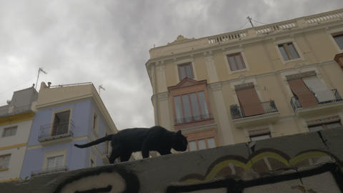 A spanish street cat Live Action