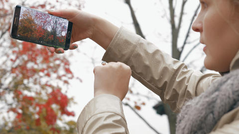 Woman taking picture of rowan tree during autumn walk with baby Acción en vivo