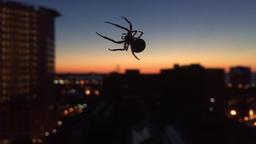 Spider Spins Web Above Cleveland Ohio