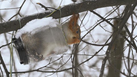 Squirrels climb trees in the forest 008 Live Action