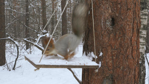 Squirrels climb trees in the forest 002 Live Action