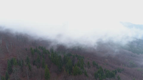 Mountain forest in fog. Twilight landscape with fog above forest Live Action