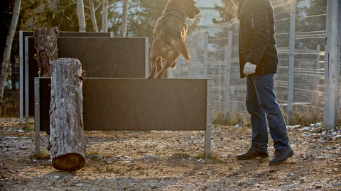 A man training his german shepherd dog on the training field - a dog jumping Live Action