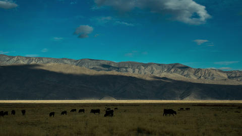 Fields Cattle and Mountains Time Lapse Footage