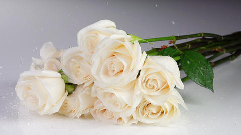 White Roses Fall Slow Motion Footage