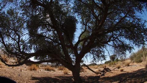 Africa Desert Sun Time Lapse Footage