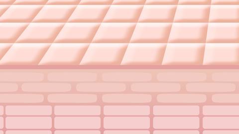 Skin0006 Animation