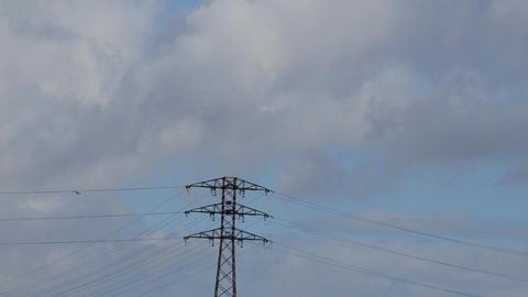 Bird Flies Near High Voltage Line Live Action