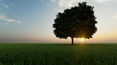 Gold one tree at sunset on dark background. Grass background. Sunrise background Live Action