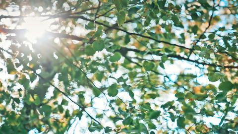 Green Bokeh From Tree ライブ動画
