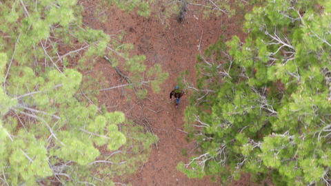 A woman walks through the pine forest View from above Live Action