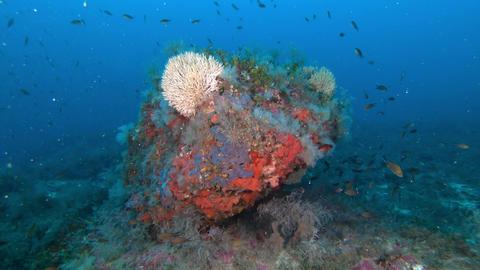 Underwater ladscape - Mediterranean sea deep scuba diving Live Action