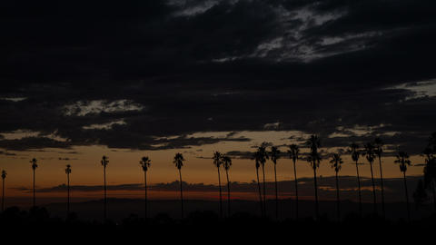 Colorful Sunset Clouds Behind Palm Trees Footage