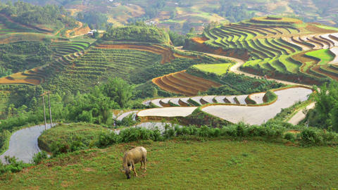 Terraced Rice Paddies In Northern Vietnam Footage