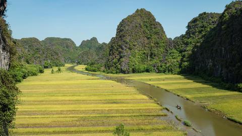 Rice Paddies In Vietnam Footage