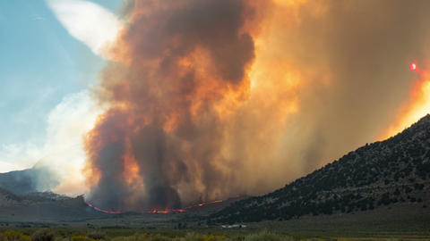 Forest Fire Burning Mountainside Footage