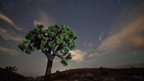 Stars Night Sky Time Lapse Joshua Tree Live Action
