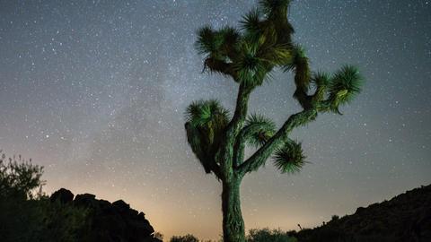 Stars Night Sky Time Lapse Joshua Tree Footage