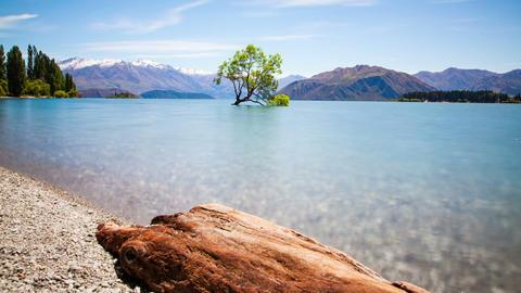 Wanaka Tree New Zealand Landscape Time Lapse Footage