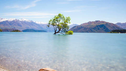 Wanaka Tree New Zealand Landscape Time Lapse Footage