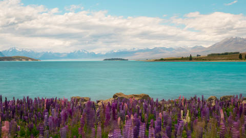 New Zealand Flowers Landscape Time Lapse Footage