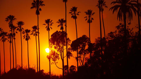 Sun Setting Behind Palm Trees Footage