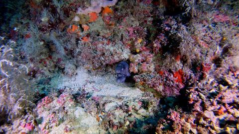 Deep scuba diving Hidden moray eel 47 meters depth Live Action