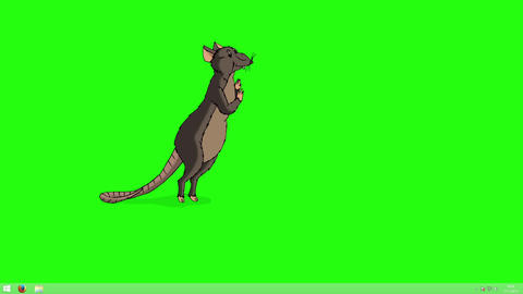 Brown rat gets up and sniffs something animation Chroma Key Animation