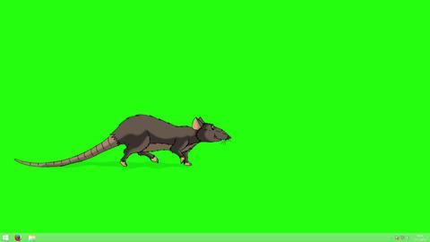 Brown Rat Walks animation Chroma Key Animation